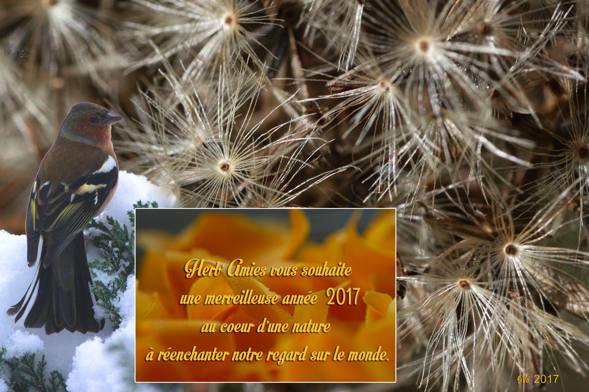 Herb'Amies vous souhaite une merverveille année 2017 au coeur d'une nature à réenchanter notre regard sur le monde .