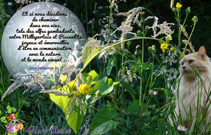 Et si nous décidions de cheminer dans vos vies, tels des elfes gambadants entre Millepertuis et Pissenlits joyeux et émerveillés d'être en communication avec la nature et le monde vivant ...